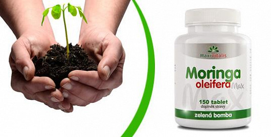 Moringa - zelená bomba mezi superfoods!