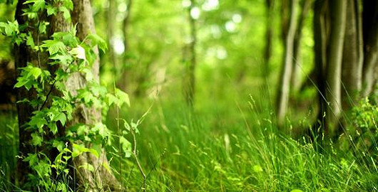 Spojení vědy a čisté přírody