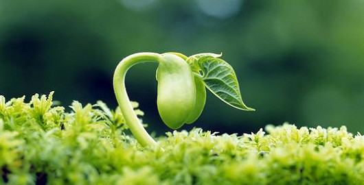 Ani botox, ani kaviár, za vším hledej rostliny