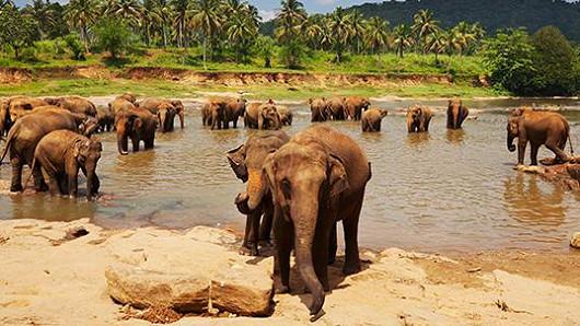 Srí Lanka – ostrov dokonalé krásy