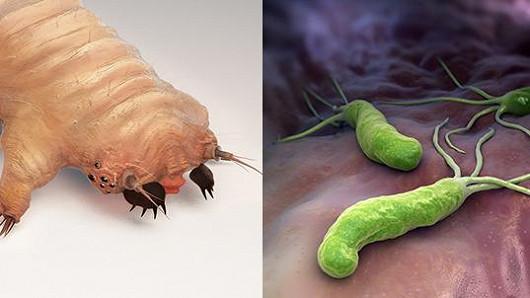 Helicobactera má každý druhý, Demodex skoro všichni
