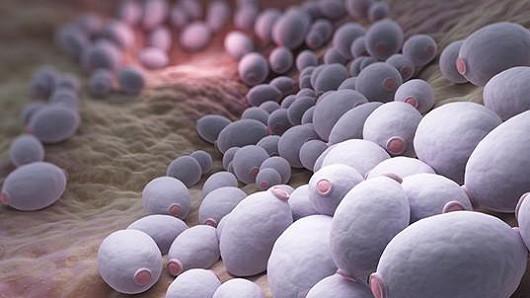 Jak spravit imunitu?