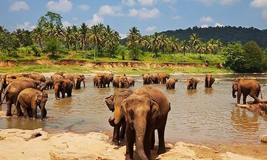 Srí Lanka – pravý dotek přírody