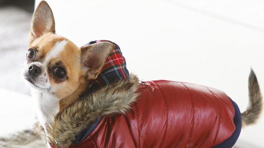 Pro společné procházky v tuhé zimě