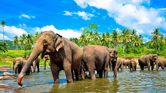 Srí Lanka - nadpozemsky krásná kapka v moři