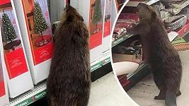 I bobři chtějí mít hezké Vánoce.