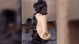 Líbí se vám zlatý psí kabátek? Připravte si 29 miliónů.