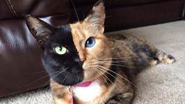 Netradičně zbarvená kočičí slečna Venus