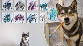 Psí umělec Hunter si vydělává malováním obrazů.