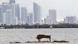 Klavír umístěný na floridský ostrov má na svědomí nejspíš šestnáctiletý student.