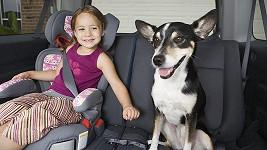 Psi v USA možná budou muset být v autě připoutáni podobně bezpečně jako děti.