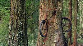Strom pohltil jízdní kolo.
