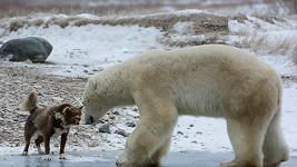Pes se umí postavit i medvědovi (ilustrační foto)