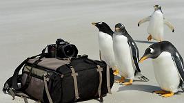 Tučňáci by možná rádi do šoubyznysu...