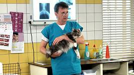 Herec se ukáže v roli zvěrolékaře.
