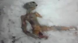 Je na tomto videozáznamu opravdu mrtvý mimozemšťan?