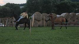 Vydru zradil při vystoupení jeden z koní.