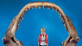 Čelist žraloka Megalodona vymřelého před 1,5 miliónu let.