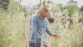 Falešný kůň toho skutečného vyděsil. (ilustrační foto)