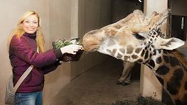 Borhyová při krmení žirafáka.
