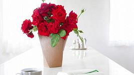 Vioagra může být vzpruha nejen pro muže, ale i pro květiny.