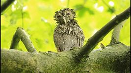 Puštíci se snažili dostat do hnízda. Pomohl jim až fotograf.