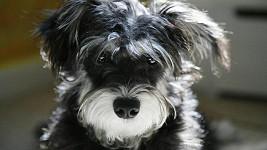 Pes může být podle průzkumu ideálním prostředkem k seznámení.