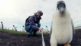Chantelle Stobbe a tučňák oslí