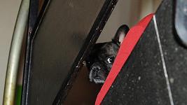 Amálky Jiřiny Jiráskové je nyní nejsmutnějším psem na světě.
