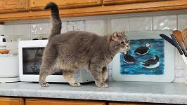 Na kočku v kuchyni číhalo nebezpečí. (ilustrační foto)