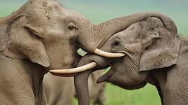 Takhle se objímají sloni.