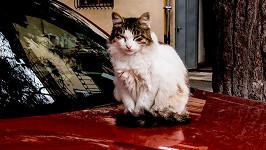 Neprovokujte kočky! (ilustrační foto)