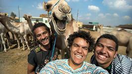 Ne vždy se chce velbloud na selfie usmívat. (ilustrační foto)