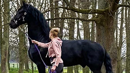 Hana Mašlíková místo oslavy 39. narozenin řeší zdravotní problémy svého koně.