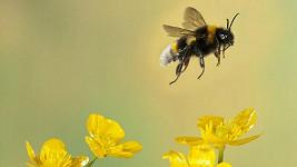 Signál mobilních telefonů negativně mění chování včel.