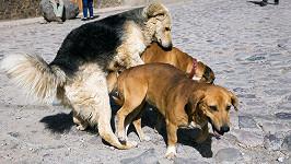 Psi byli při chuti... (ilustrační foto)