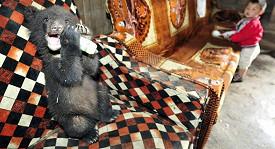 Huňatí medvídci se rychle stali součástí rodiny farmáře Tiana.