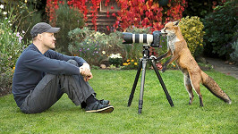 Fotograf se skamarádil s liškou...