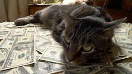 I kočky jdou po penězích. (ilustrační foto)