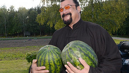 Steven Seagal byl prezidentem obdarován melouny z vlastní zahrádky...