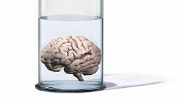 Lidský mozek údajně dosáhl z hlediska inteligence svého maxima.