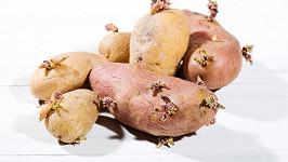 Hlíza brambory důvěřivé Kolumbijce pořádně znepříjemnila život. Ilustrační foto