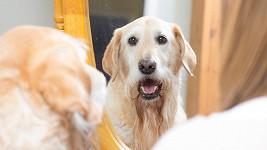 Zrcadlo je pro psy zábava. (ilustrační foto)