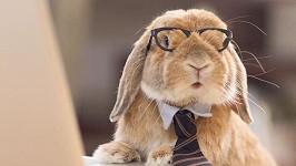 Tenhle králík by pasoval k Jasmině Alagič a ten ve videu pod článkem k Rytmusovi.