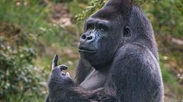 I opice mají právo vyjádřit svůj názor...