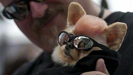 Jaký pán, takový pes.