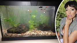 Agáta a její akvárium