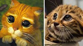 Mládě kočky černonohé jako by kocourovi z pohádky z oka vypadlo...