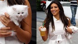 Kim Kardashian a její nové koťátko.