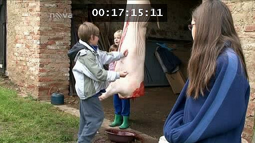 Během natáčení byla u Koktových zabíjačka.